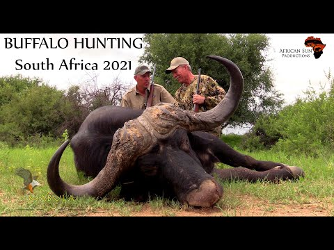 Buffalo hunting - South Africa. Join Chris and Mabula Pro Safaris in Limpopo Province