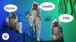 Лучшие ПРИКОЛЫ и МЕМЫ с котами пародия! часть 3