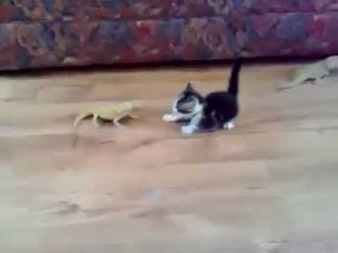 Little Kitten Gets surprised & Freaked Out by Lizard