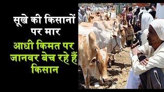 सूखे की किसानों पर मार,आधी किमत पर जानवर बेच रहे हैं किसान | Mumbai Tak
