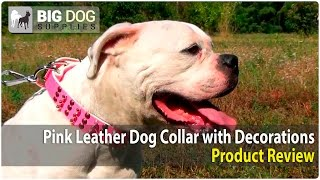 American Bulldog And Other Large Dogs Wearing Pink Decorated Dog Collar