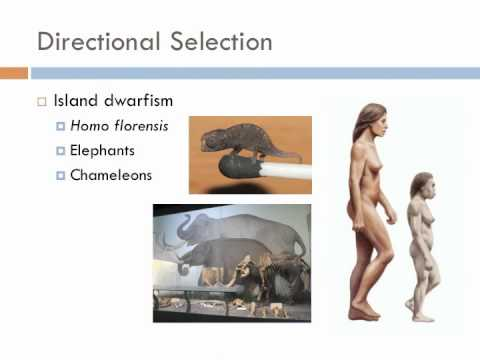 a look at the natural evolutionary process What are the main points of darwin's theory of evolution how does the process  of natural selection work what evidence do we have for local adaptation.