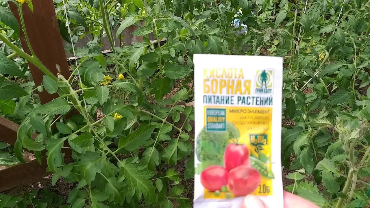 Помидоры-чем опрыскиваю и подкармливаю во время цветения, для увеличения урожая