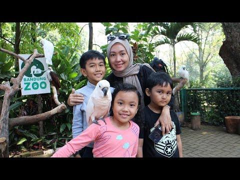 Beginilah Kondisi Kebun Binatang Bandung Jaman Now! | Bandung Zoo 2018 | ToscaVlog
