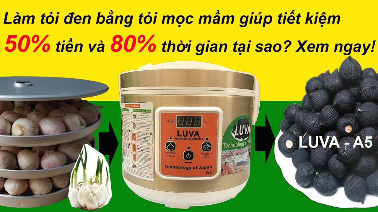 Bí quyết làm tỏi đen bằng nồi làm tỏi đen LUVA  A5 và tỏi cô đơn mọc mầm | How to make black garlic?