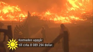 """Bränderna i Kalifornien – """"31 personer döda"""" - Nyhetsmorgon (TV4)"""