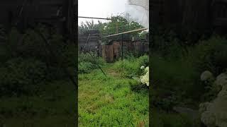 Дождь с градом в Белеве Тульская область