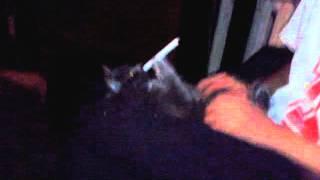 видео Кошка забирает сигарету, кот курит
