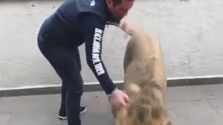 Watch this Lion reaction after seing this man