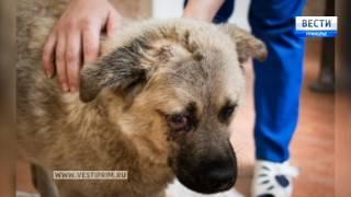 Раненую в Находке собаку Жулиту лечат во Владивостоке