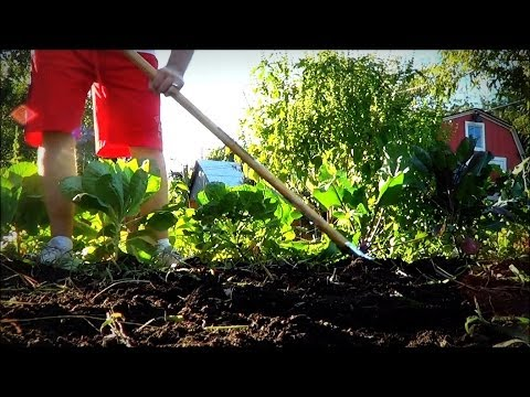 Fastest Way to Organically Remove Weeds from the Garden