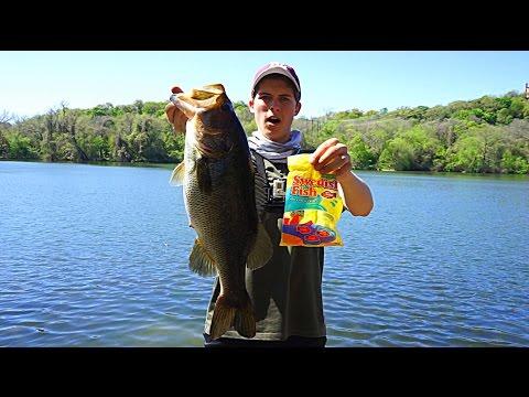 Swedish Fish Catch Big Bass? | TylersReelFishing