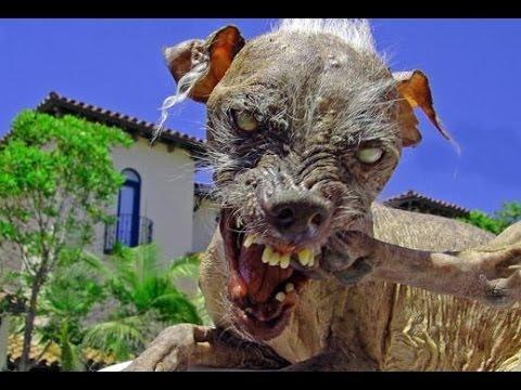 World's Ex Ugliest Dog