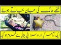 - A Dog Save A life From Sleeping Baby In Cobra   Interesting facts Dil Chasp Malomat   Mr Pakistan