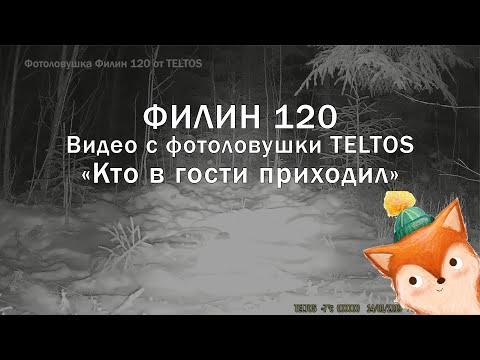 Видео с фотоловушки Филин 120 TELTOS ночью