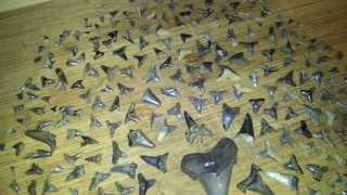 East Texas killer sharks tooth hunt