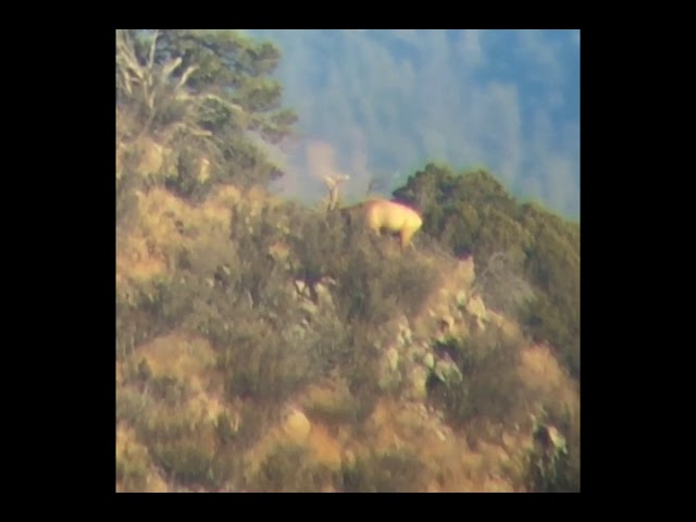Elk Video May 19, 4 46 15 PM