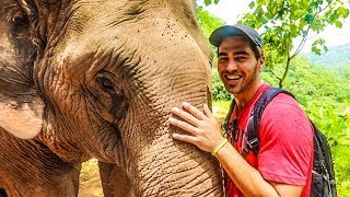 SPENDING A DAY WITH ELEPHANTS! (Part 2)