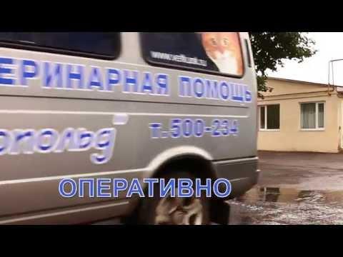 Клиника Леопольд. Ветеринарная помощь на дому