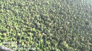 【スマトラ森林保全プロジェクト】空から見た残された自然林