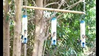 Modified Bird Feeder