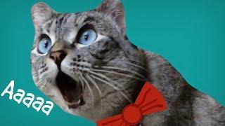 """Кот кричит: """"Ааааа"""""""