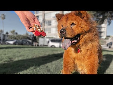 Homeless Senior Dog Tries a Cookie for the First Time - Amazing Reaction to Holiday Dog Cookie