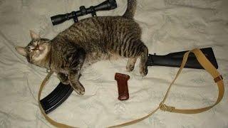 !!!!!!ПЕРВОЕ видео про кота(ак 47)** кот КОТОРЫЙ автомат*****
