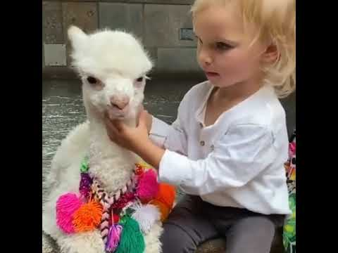 Baby and Cria video