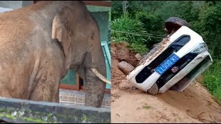 Wild Elephant Breaks Five Cars within Week in Southwest China