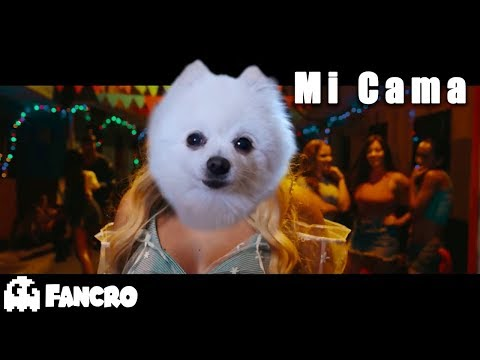 Karol G - Mi Cama (Official Video) - Cover Perros