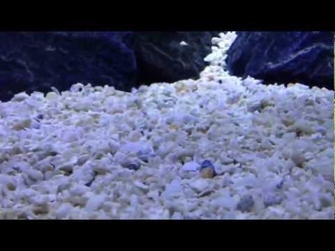 CaribSea Florida Crushed Coral Geo-Marine Formula HD