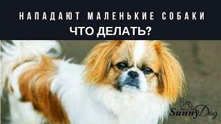 если нападают маленькие собаки - что делать? Мои ситуации.