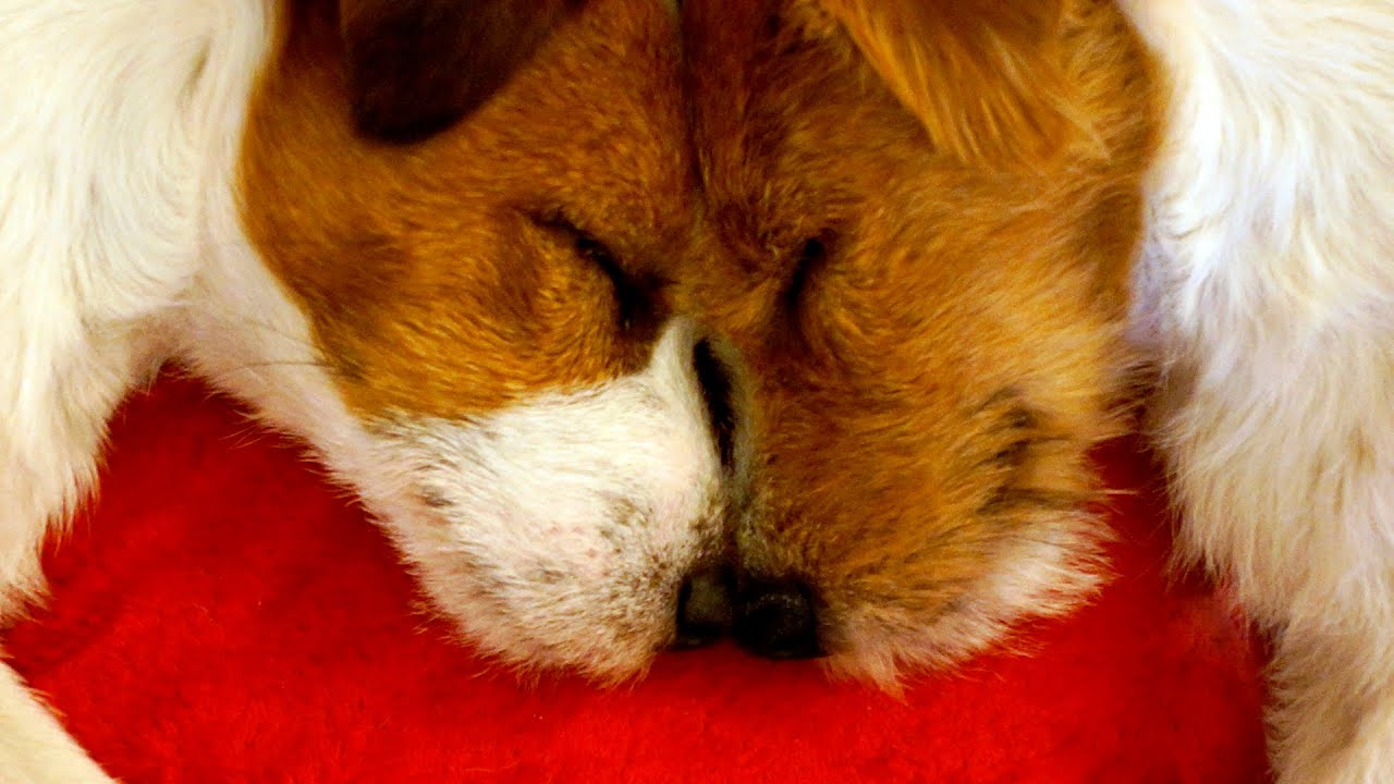 Dogs Kissing Each Other YouTube - 26 funny photos of guilty dogs