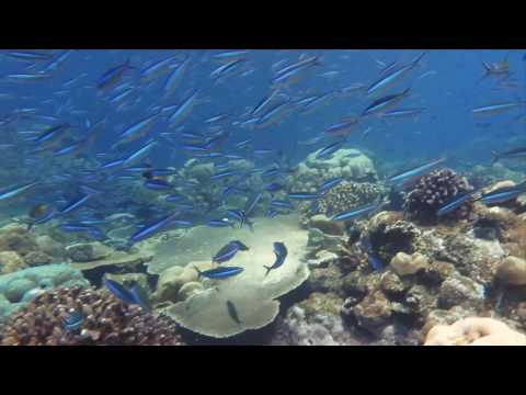 Christmas Island Diving Video 2015