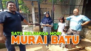 Satu Keluarga Hobi Murai, Bongkar Rahasia Sukses Pesona BF