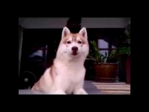 Смешные собаки видео -