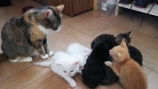 Как назвать котят? Конкурс на лучшее имя.