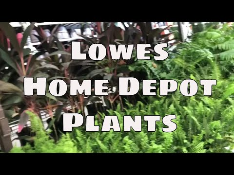 Home Depot And Lowe's Plant Shopping And Haul Houseplants Succulents Tropicals