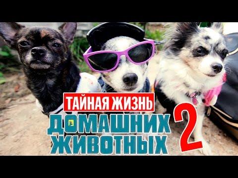 КиноГрехи: Все проколы «Тайная Жизнь Домашних Животных» чуть менее, чем за 12 минут