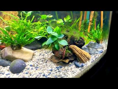 RENA Freshwater tank Eheim and JBL filters
