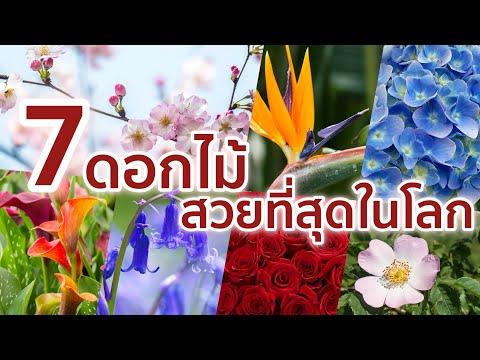 """7 ดอกไม้ที่ถูกขึ้นชื่อว่า """"สวยงามที่สุดในโลก"""""""