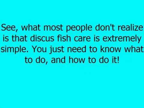 keeping discus fish pdf