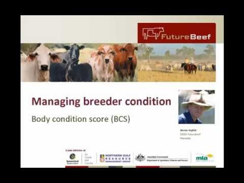 Managing Breeder Condition