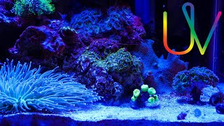 homepage tile video photo for Fighting Algae in Nano Reef Tank - Cyano Update!