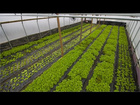FIRST LESSONS WITH WINTER GREENHOUSE GROWING!! - YouTube