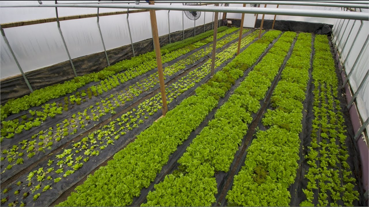 FIRST LESSONS WITH WINTER GREENHOUSE GROWING!! on pruning plants, bayou plants, green plants, farm plants, indoor plants, history plants, horticulture plants, watering plants, fertilizing plants, pepper plants, annuals plants, cartoon fern plants, tomatoes plants, nursery plants, potted plants, landscaping plants, water plants, tropical plants, sci-fi plants, how grow zinnia plants,