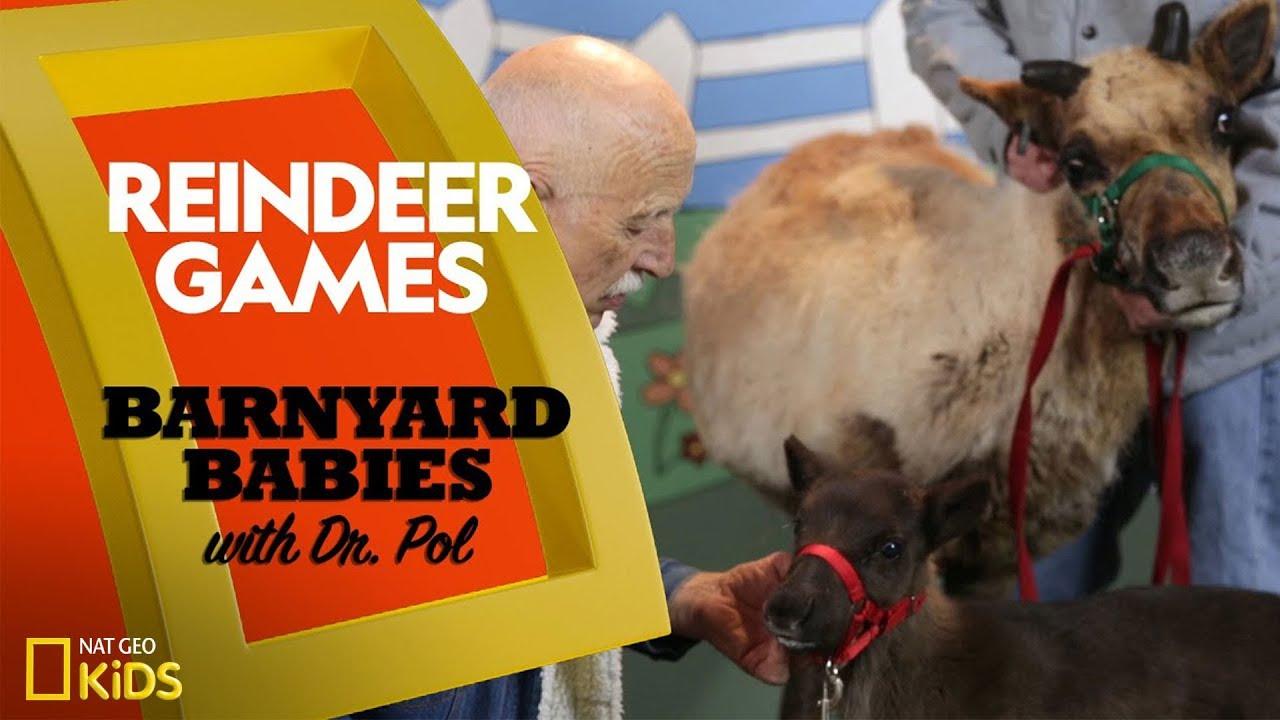 Reindeer Games   Barnyard Babies with Dr. Pol