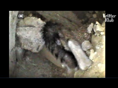 Cat Cries For Help To Save Her Kittens Stuck Inside The Cement Ground | Animal in Crisis EP58