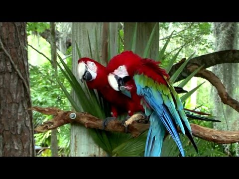 3 HOURS 🐦Tropical Birds playing in Aviary Video Screensaver HD 1080P